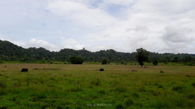 padang-savana