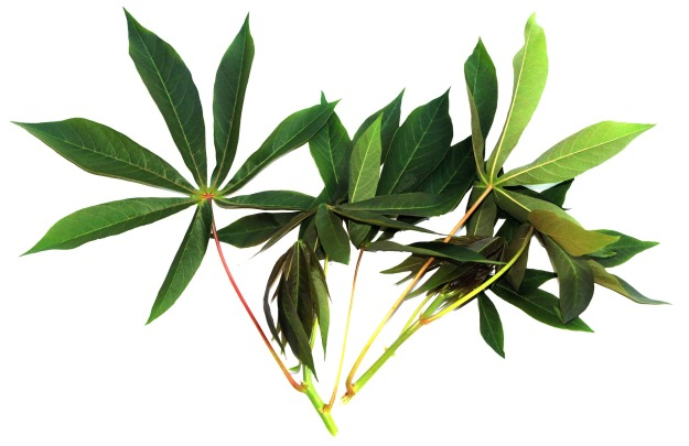 cassava-leaves-878933_1920.jpg